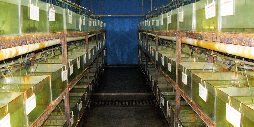 Fish tank systems