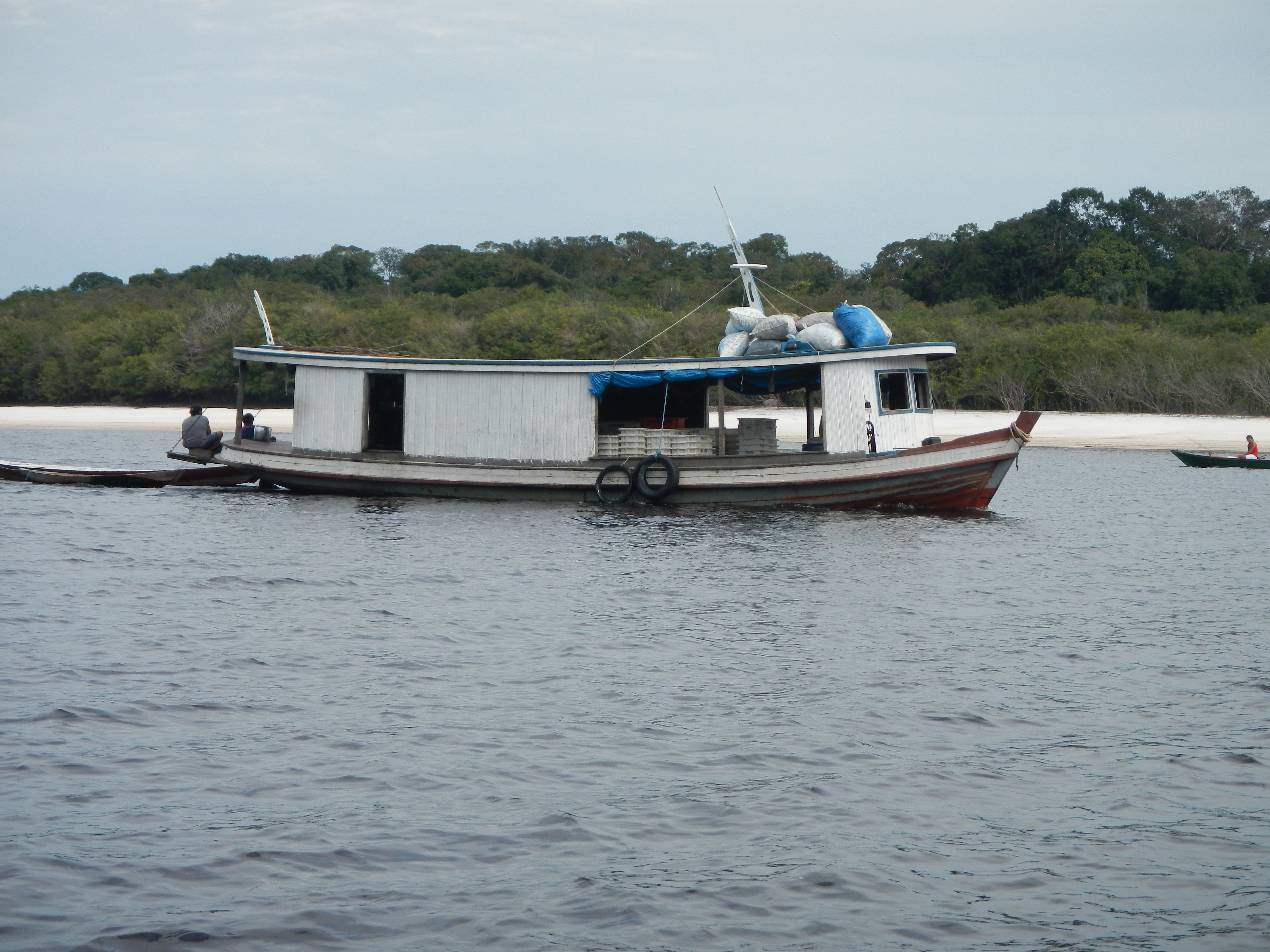 The fish travel to the export facilities by boat