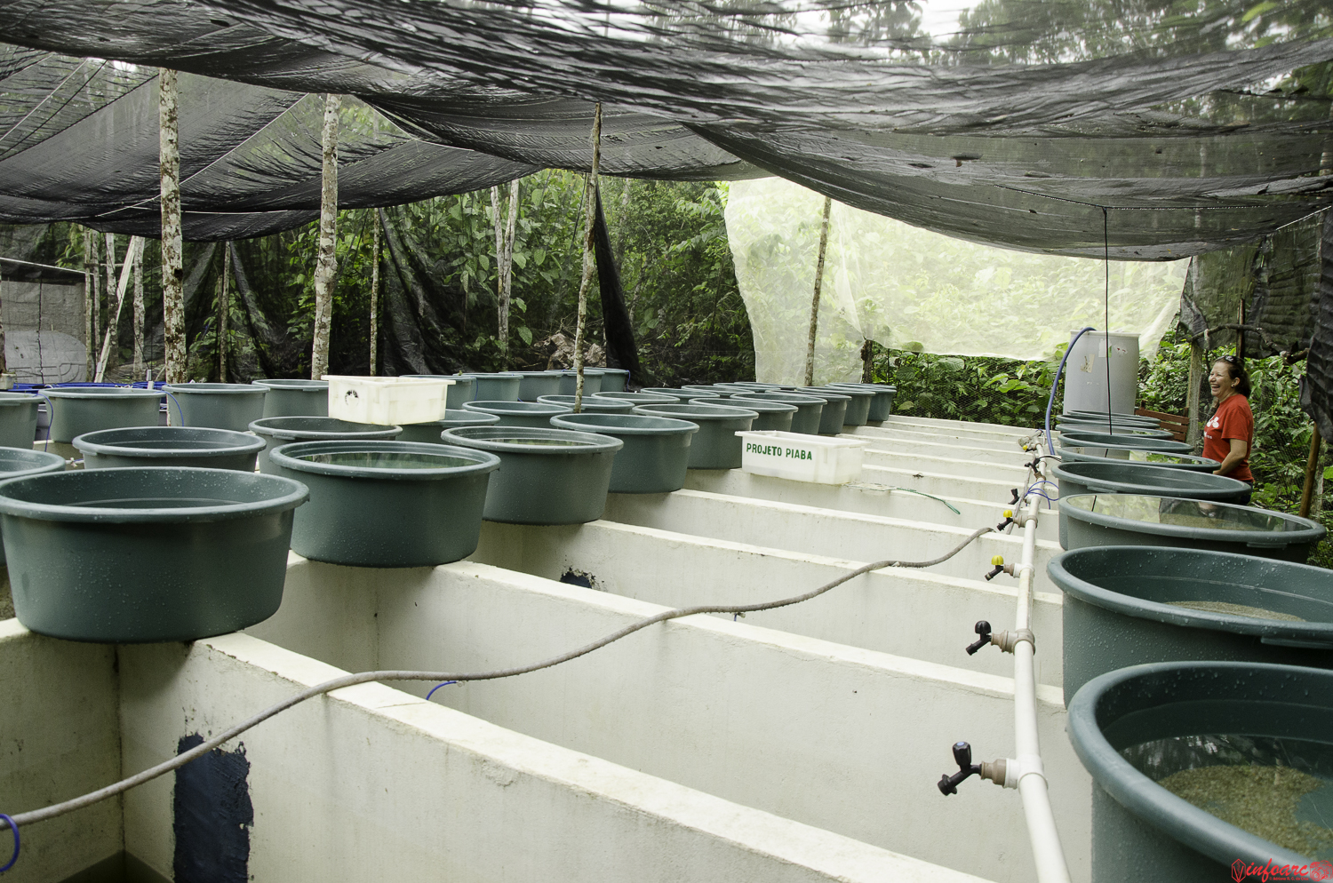 Before Export, the fish are held in ponds and tanks at facilities (photo: Adriano Cruz)